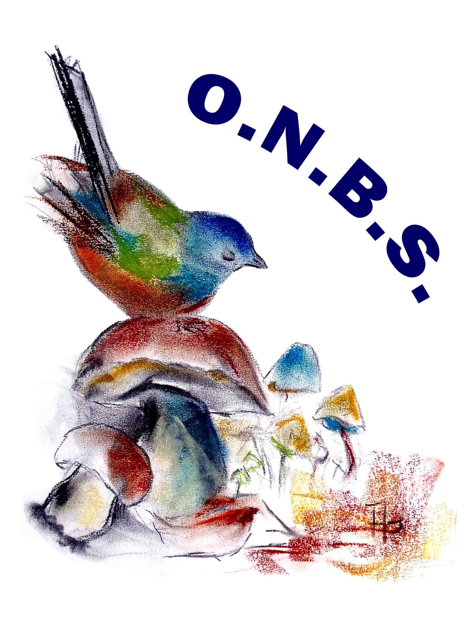 Oiseaux et nature en bourgogne du sud le breuil en for Les oiseaux du sud de la france